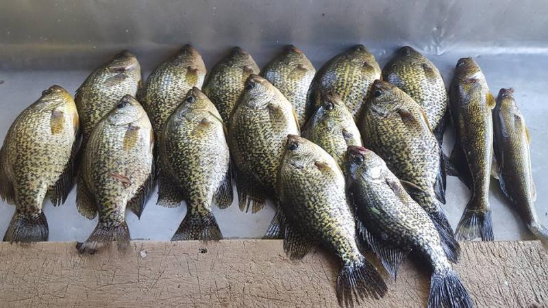 Howard's group caught the Crappies