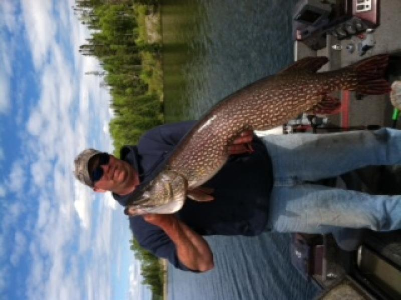 Dave's 48 inch Northern