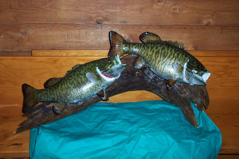 Doyle\'s twin smallmouth bass mount